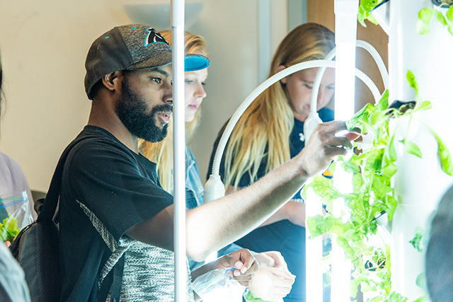 Three students tend to a vertical garden in the School of Education.
